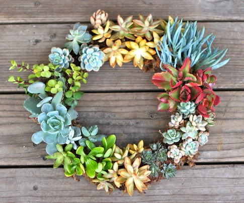 Summer-Wreath-Succulents